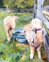 Sheep at Slate Run